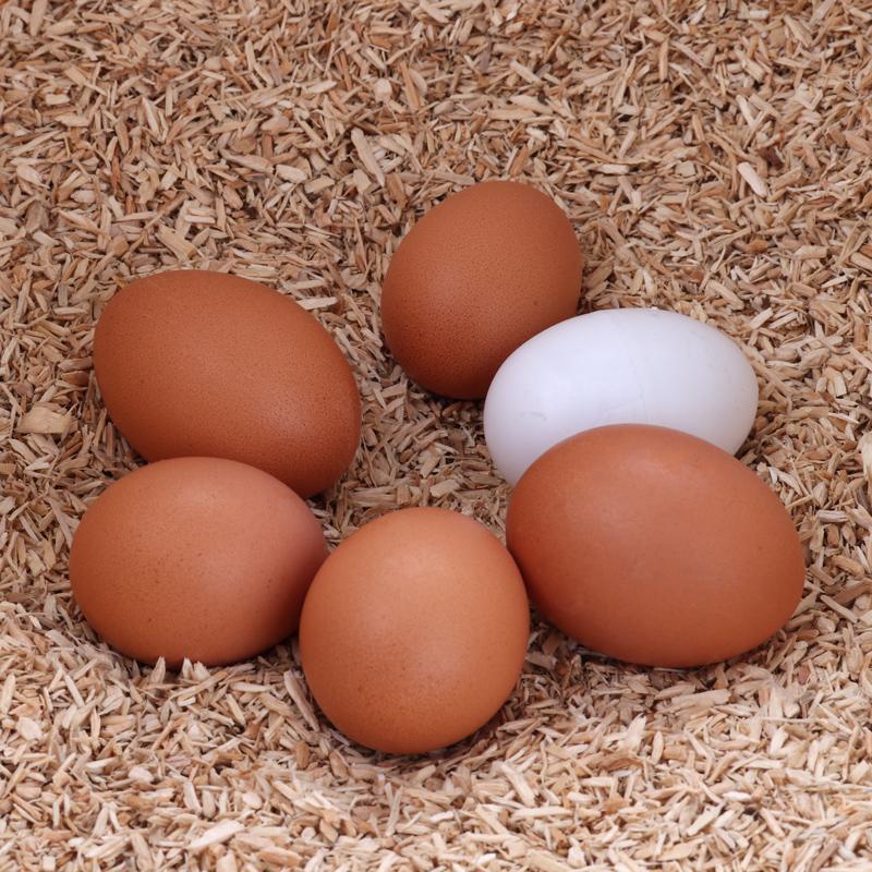 Legenest im mobilen Hühnerstall