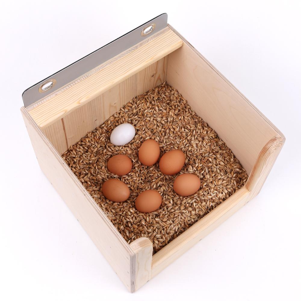 Legenest mit frisch gelegten Eiern